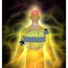 Das Selbstwahrnehmungs-System nach Yogi Bhajan (Self-Sensory-System)- PDF-Datei